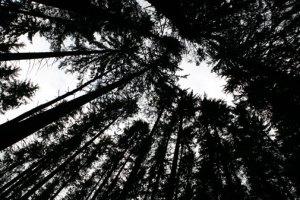 promo-blackforest2